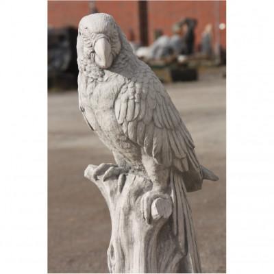 Papagei Stamm