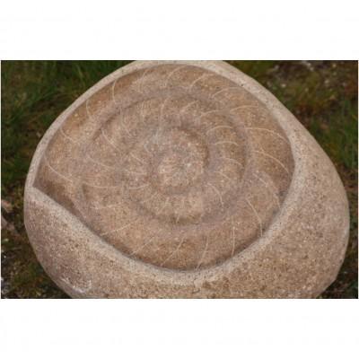 Findling Ammonit