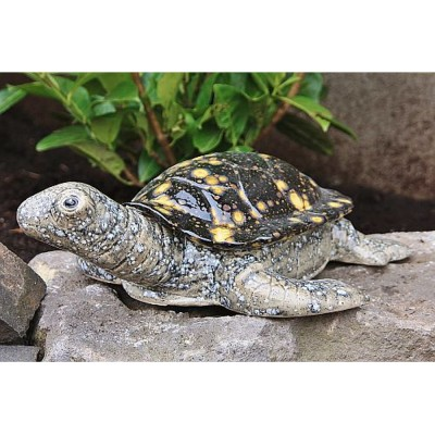 Schildkröte Groß