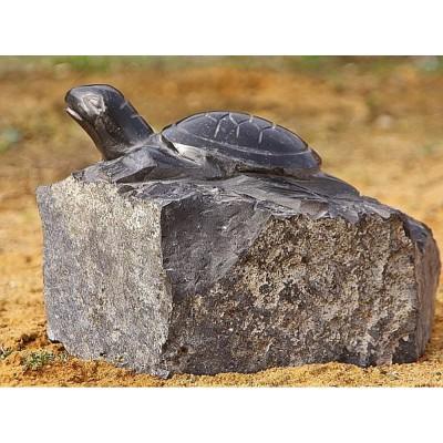 Schildkröte als Relief
